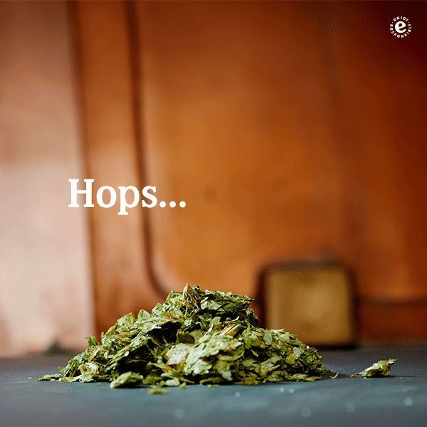 Heineken Credentials 2017 Ingredients Hops